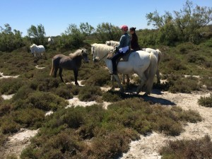 riding horses in Camargue