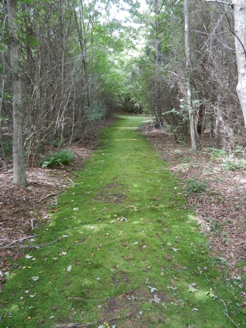 Cranberry moss trail