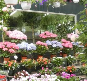 Flower market Paris