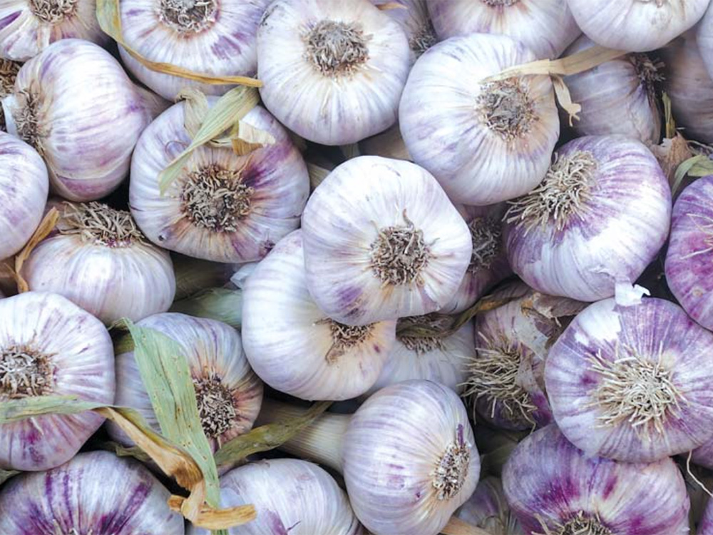 onions-1000x750