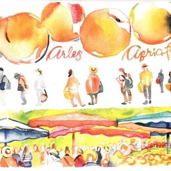 Arles market and apricots by artist Carol Gillott