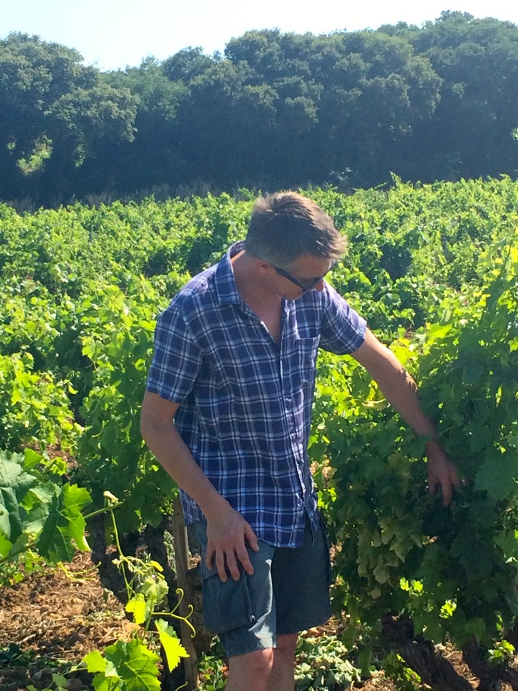 Châteauneuf-du-Pape vineyard with Olivier Hickman